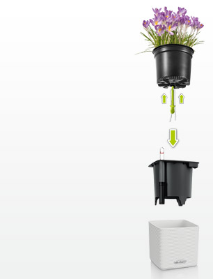 Place grow pot in CUBE Color 14