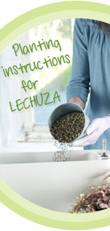 How to Plant in LECHUZA