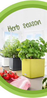 Time to harvest your herbs