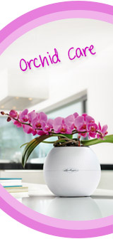 In Full Bloom: Tips and Tricks for Orchid Care